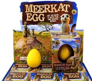 Growing Egg Meerkat - Display of 12