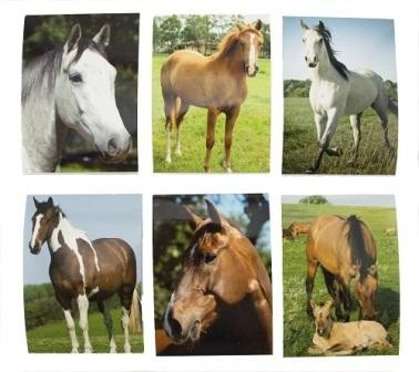 Horse Memo Pad - Display of 48