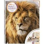 Paint by Numbers Canvas: Portrait of a Lion 41 x51cm (Min Order Qty 1)