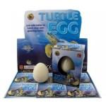 Growing Pet Turtle Egg CDU of 12 (Min Order Qty 1 CDU)