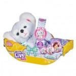 Little Live Cozy Dozy Kip the Koala (Min Order Qty 1)