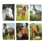 Horse Memo Pad - Display of 48 (Min order qty 1)